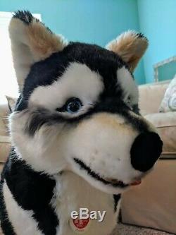 Steiff Studio Husky Dog Display Plush GORGEOUS